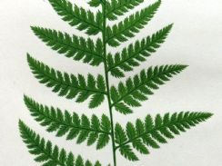 31st January 2019. Lowe Fern Prints